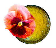 Pictured Yellow Cocktail with Pink Flower